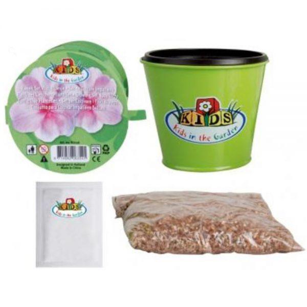 Children's Busy Lizzy Flower Grow Kit